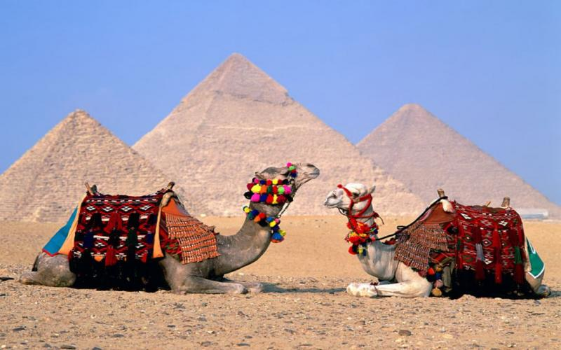 egypt_cairo_camels