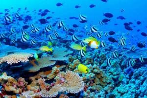 marea-bariera-de-corali-australia_d9015a0426
