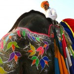 A mahout sits atop his decorated elephant in Jaipur